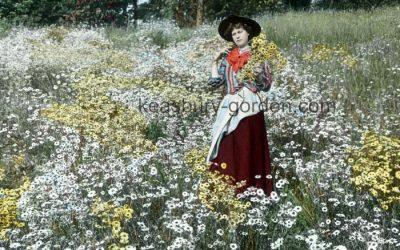 The Daisy Field