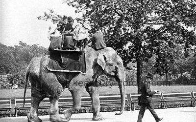 The Elephant Ride, Regent's Park Zoo, London